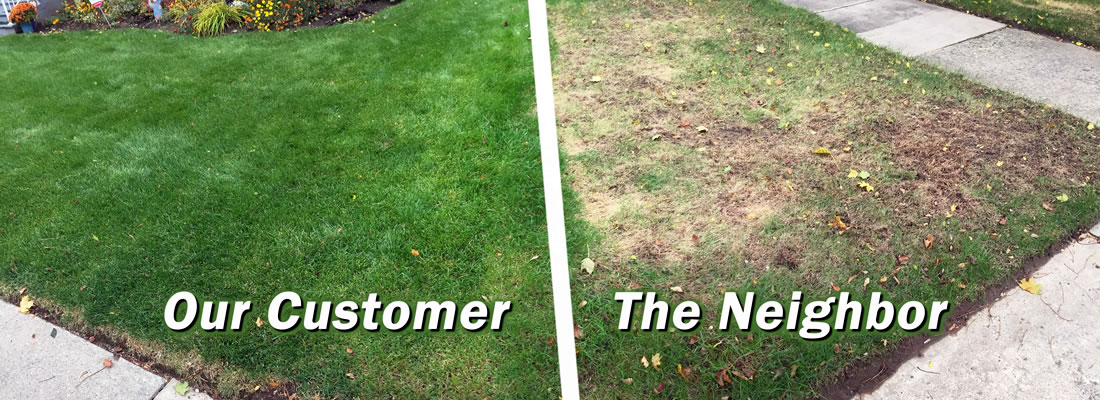 Lawn Fertilization Services throughout the capitol region of New York, including: Schenectady, Niskayuna, Rotterdam, Glenville, Scotia, Clifton Park, Halfmoon, Saratoga, and Guilderland