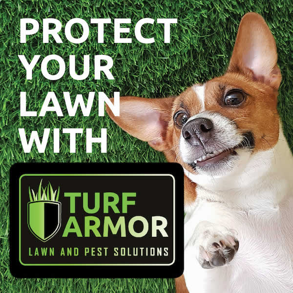 Lawn Treatment & Pest Solutions